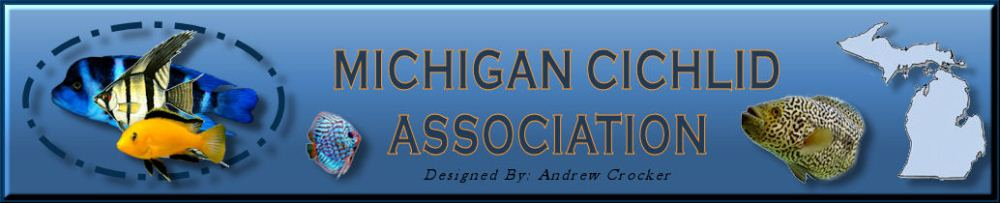 Michigan Cichlid Association