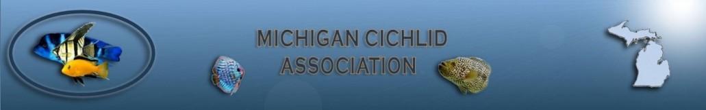 Michigan Cichlid Association